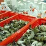 Thị trường - Tiêu dùng - Xuất khẩu tôm sang Nhật vướng chất cấm mới