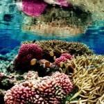 Du lịch - Top 10 điểm lặn biển ấn tượng nhất thế giới