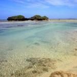 """Du lịch - Những """"ngôi sao nhỏ"""" trên bãi biển ở Nhật Bản"""