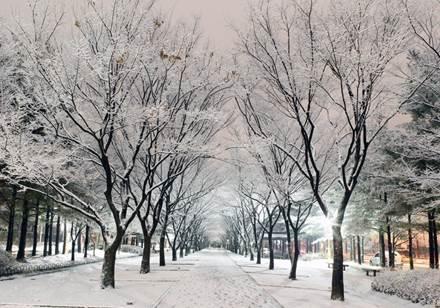 Mùa xuân trượt tuyết xứ Hàn - 3
