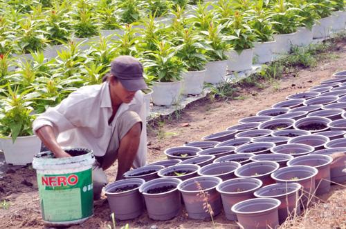 Tất bật trên những vựa hoa Tết ở Sài Gòn - 7