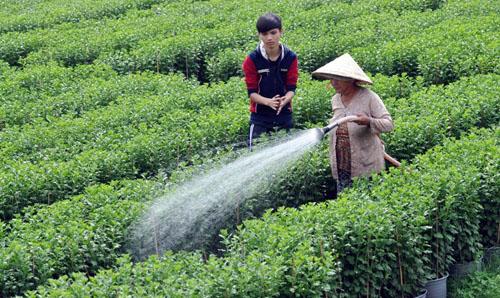 Tất bật trên những vựa hoa Tết ở Sài Gòn - 12
