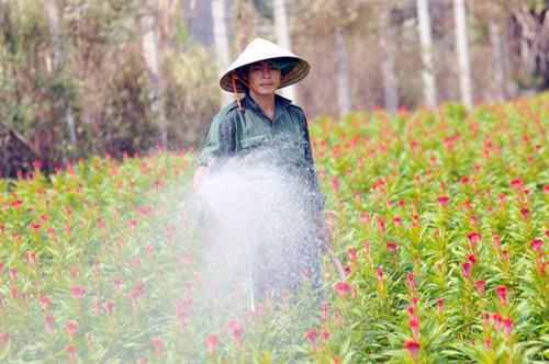 Tất bật trên những vựa hoa Tết ở Sài Gòn - 9