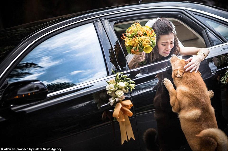 Rung động trước những bức ảnh cưới đẹp nhất 2014 - 4