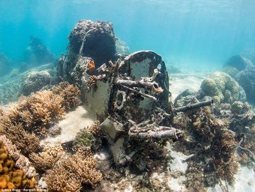 """""""Nghĩa địa"""" máy bay khổng lồ dưới đáy biển ở Nhật - 2"""