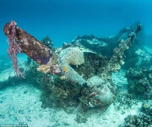 """""""Nghĩa địa"""" máy bay khổng lồ dưới đáy biển ở Nhật - 6"""