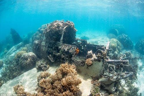 """""""Nghĩa địa"""" máy bay khổng lồ dưới đáy biển ở Nhật - 9"""