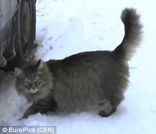 Chú mèo cứu sống em bé bị bỏ rơi trong giá lạnh - 3