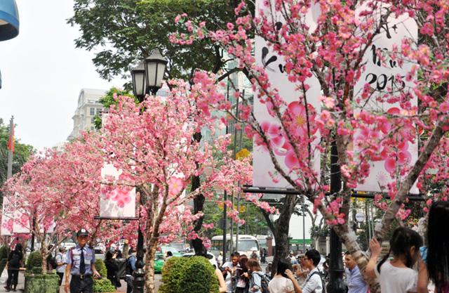 Hoa mai, đào khoe sắc rực rỡ giữa Sài Gòn - 4