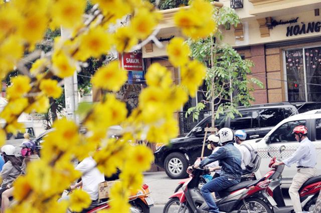 Hoa mai, đào khoe sắc rực rỡ giữa Sài Gòn - 3