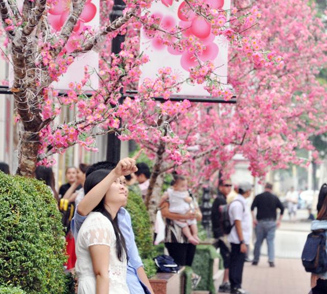 Hoa mai, đào khoe sắc rực rỡ giữa Sài Gòn - 10