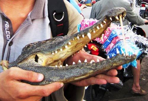 Tràn lan thịt cá sấu lề đường - 2
