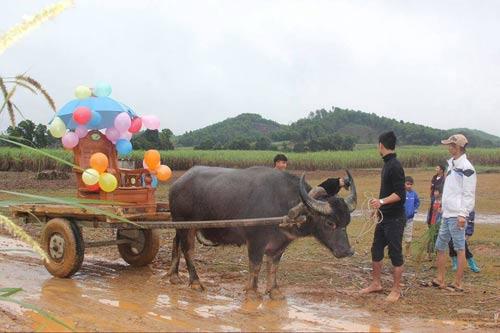 Rước dâu bằng xe trâu gây ấn tượng ở Nghệ An - 4