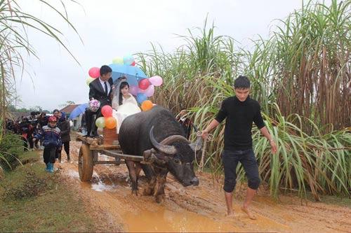 Во Вьетнаме молодожены собрали свадебный кортеж из буйволов