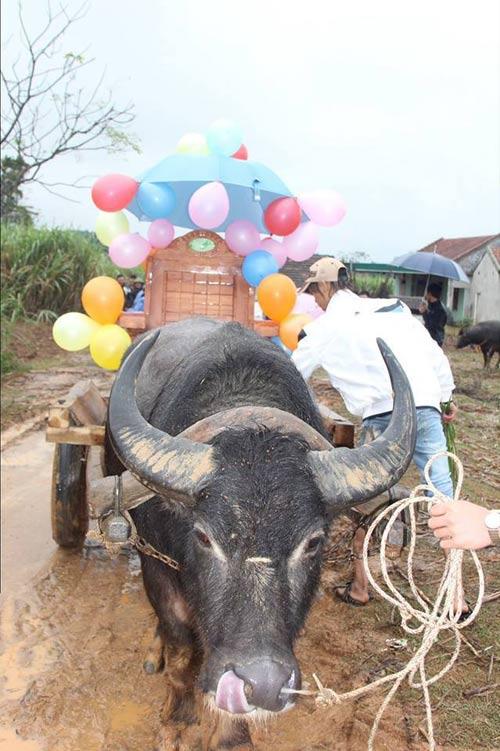 Rước dâu bằng xe trâu gây ấn tượng ở Nghệ An - 5