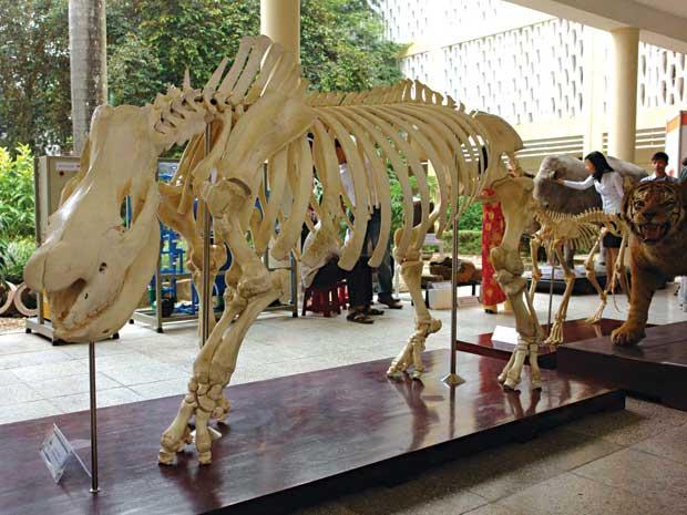 Việt Nam sắp có Bảo tàng Thiên nhiên - 1