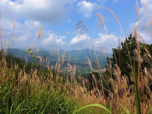 """Chinh phục """"nóc nhà"""" Lâm Đồng và ngủ giữa rừng thông - 3"""