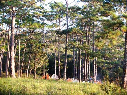 """Chinh phục """"nóc nhà"""" Lâm Đồng và ngủ giữa rừng thông - 10"""