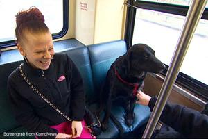 Video: Cô chó tự bắt xe bus đi chơi