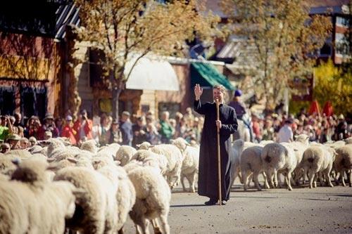 Ấn tượng hàng ngàn chú cừu diễu hành tại Mỹ - 2