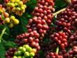Đắk Lắk mạnh tay chi 20 tỷ đồng cho lễ hội cà phê 2015