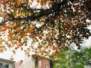Ngắm Hà Nội đẹp như tranh trong mùa lá bàng đỏ rực