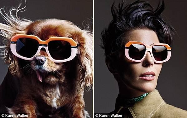 Chú chó không răng vụt sáng thành ngôi sao thời trang - 6