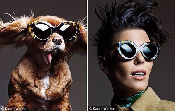 Chú chó không răng vụt sáng thành ngôi sao thời trang - 7