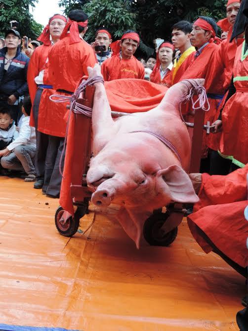Lễ hội chém lợn: Chỉ thực hiện nghi lễ xẻ thịt - 1