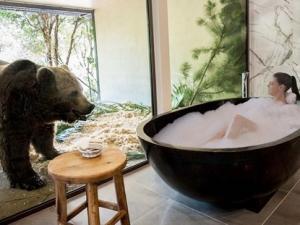 Video: Ăn, ngủ chung với gấu, sư tử