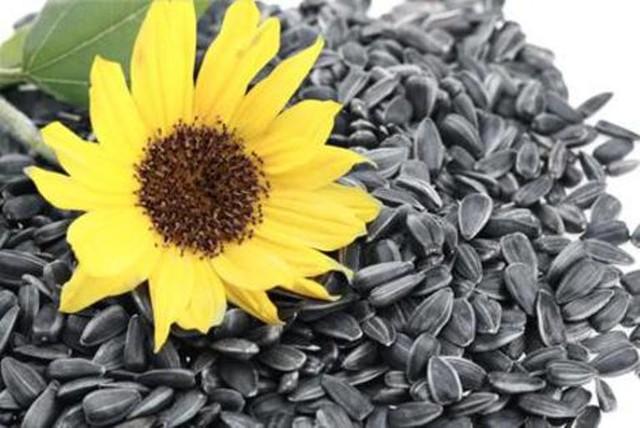 Tết ăn hạt hướng dương có lợi gì cho sức khỏe? - 1