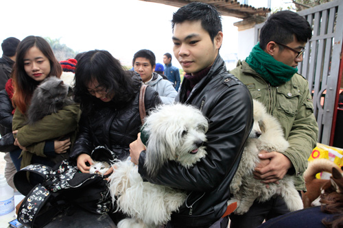 Hàng trăm bạn trẻ HN đưa chó, mèo đi khám bệnh miễn phí - 3
