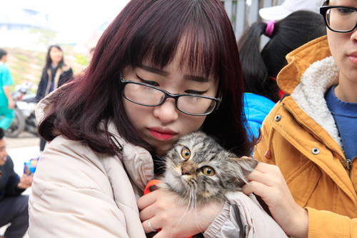 Hàng trăm bạn trẻ HN đưa chó, mèo đi khám bệnh miễn phí - 7
