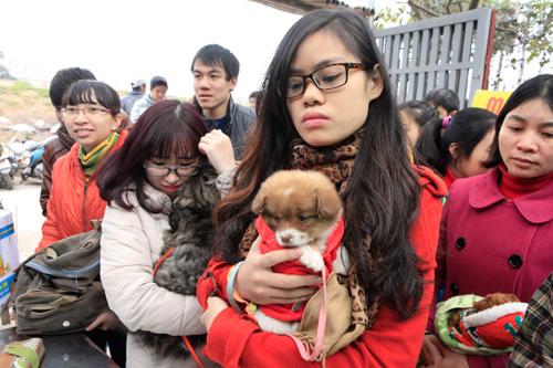 Hàng trăm bạn trẻ HN đưa chó, mèo đi khám bệnh miễn phí - 6