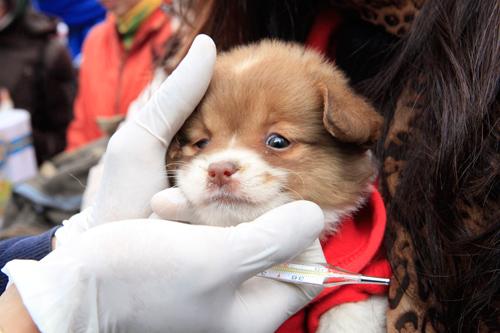 Hàng trăm bạn trẻ HN đưa chó, mèo đi khám bệnh miễn phí - 5