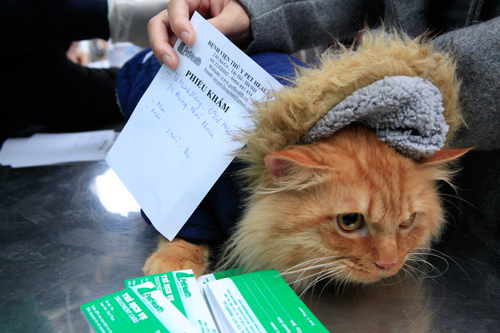 Hàng trăm bạn trẻ HN đưa chó, mèo đi khám bệnh miễn phí - 8