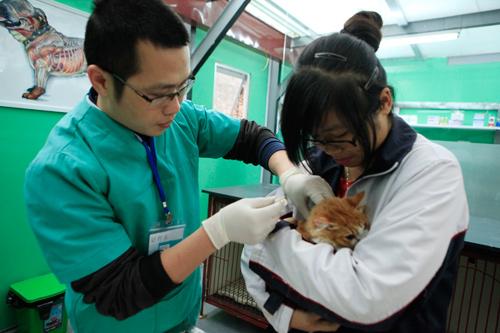Hàng trăm bạn trẻ HN đưa chó, mèo đi khám bệnh miễn phí - 10