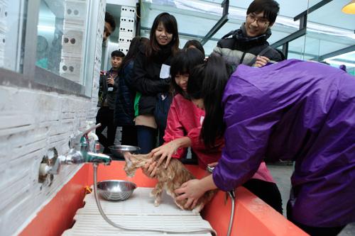 Hàng trăm bạn trẻ HN đưa chó, mèo đi khám bệnh miễn phí - 11