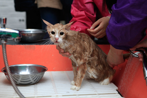 Hàng trăm bạn trẻ HN đưa chó, mèo đi khám bệnh miễn phí - 12