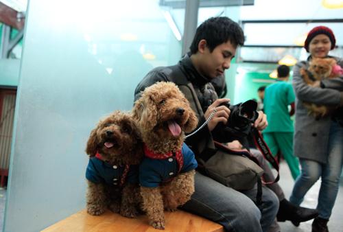 Hàng trăm bạn trẻ HN đưa chó, mèo đi khám bệnh miễn phí - 14