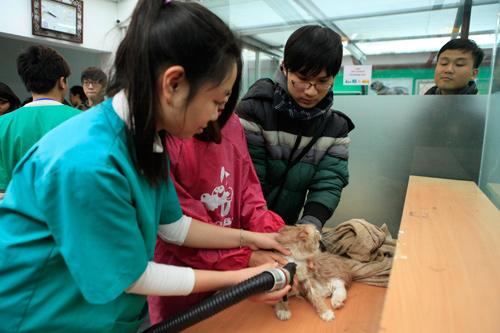 Hàng trăm bạn trẻ HN đưa chó, mèo đi khám bệnh miễn phí - 13