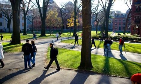 ĐH Harvard: Ban hành chỉ thị cấm thầy - trò yêu nhau - 1