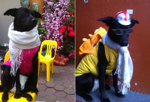 """""""Phát cuồng"""" với chó mèo mặc sành điệu khi xuống phố - 2"""