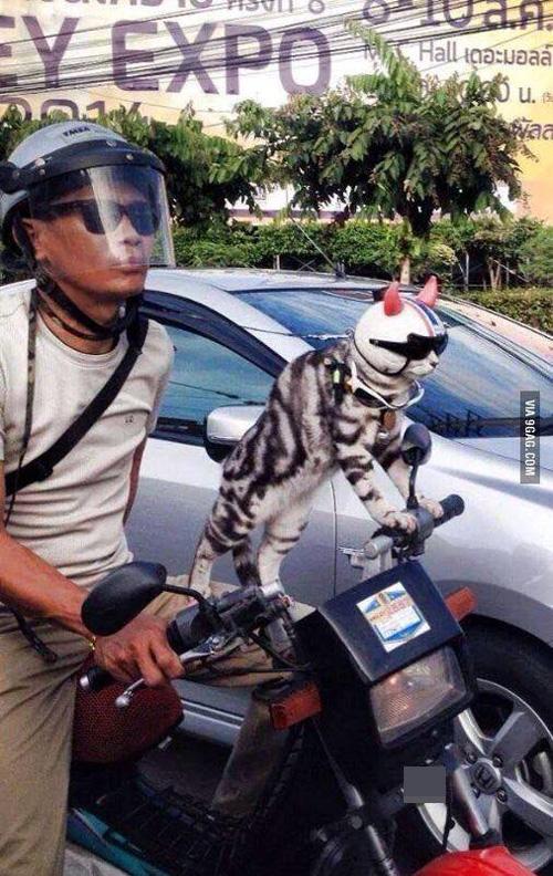 """""""Phát cuồng"""" với chó mèo mặc sành điệu khi xuống phố - 5"""