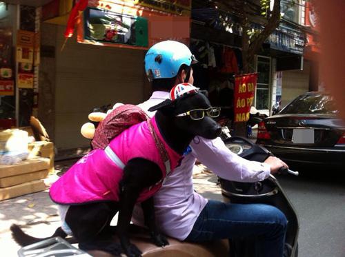"""""""Phát cuồng"""" với chó mèo mặc sành điệu khi xuống phố - 1"""