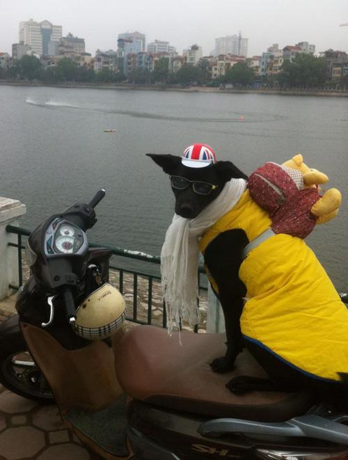 """""""Phát cuồng"""" với chó mèo mặc sành điệu khi xuống phố - 3"""