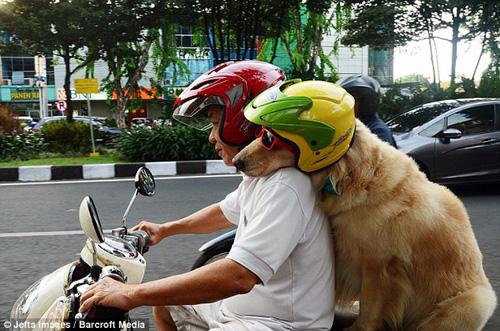 """""""Phát cuồng"""" với chó mèo mặc sành điệu khi xuống phố - 6"""