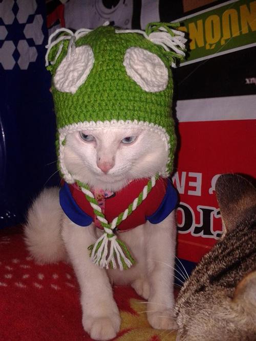 """""""Phát cuồng"""" với chó mèo mặc sành điệu khi xuống phố - 17"""