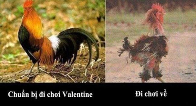Cười ngả nghiêng với bộ ảnh chế Valentine - 6