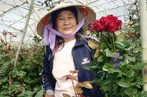 Hoa hồng Đà Lạt tăng giá gấp 5 lần trước Valentine - 3